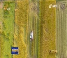 【权威发布】山东:到2020年新增有效耕地面积105万亩