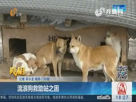 【真相】烟台:流浪狗救助站之困