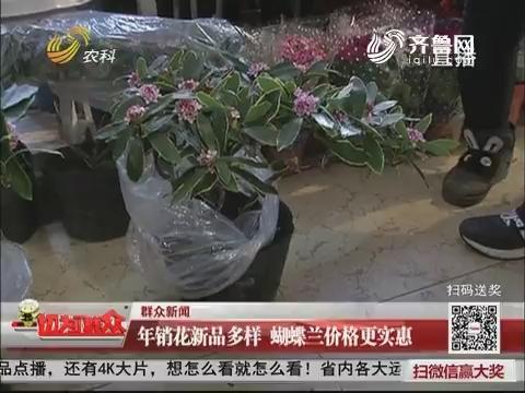 【群众新闻】济南:年宵花新品多样 蝴蝶兰价格更实惠