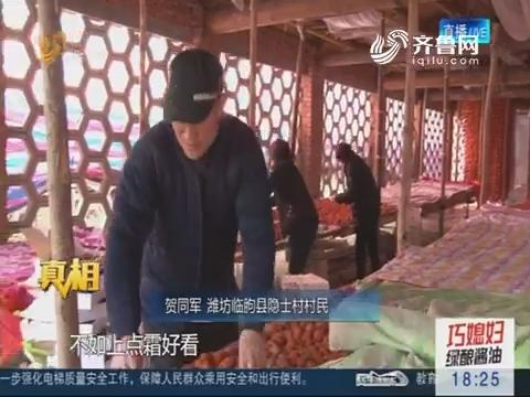 【真相】潍坊:这里有个柿子村 一年产出三千万