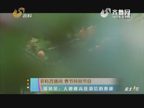20180211《农科直播间》:潘凤荣——大樱桃高效栽培的奥秘 选好品种与砧木