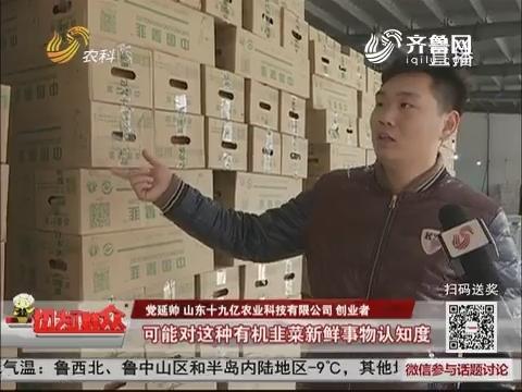 济南:80后种出万盆有机韭菜 却遭遇销售难