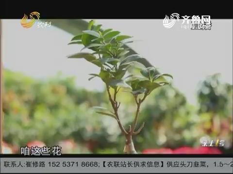 """【新春走基层·新农人年货店】我的花儿会""""唱歌"""""""