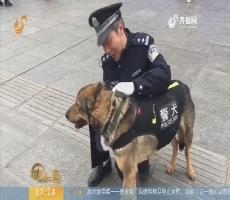 """【闪电新闻排行榜】春节故事:警犬""""龙牙""""和训导员的春节第一天"""
