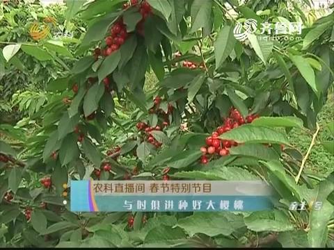 20180217《农科tb988间》:春节特别节目 与时俱进种好大樱桃