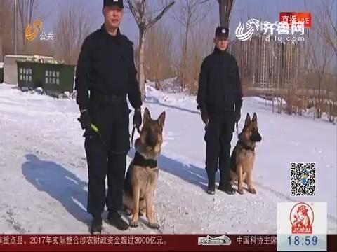 身怀绝技的警犬