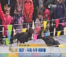 临沂:斗鸡 斗羊 闹新春