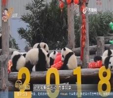 【闪电新闻排行榜】大熊猫宝宝迎新 送上最萌祝福