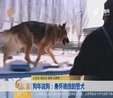 【闪电新闻排行榜】狗年说狗:身怀绝技的警犬