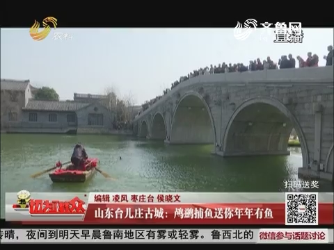 山东台儿庄古城:鸬鹚捕鱼送你年年有鱼