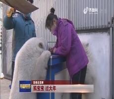 【新春走基层】熊宝宝 过大年
