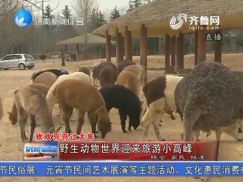 【欢欢喜喜过大年】野生动物世界迎来旅游小高峰