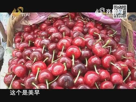 永莲樱桃走中国 带你看懂大连樱桃市场