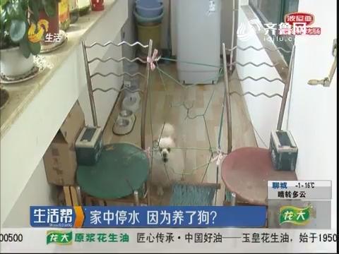 淄博:家中停水 因为养了狗?