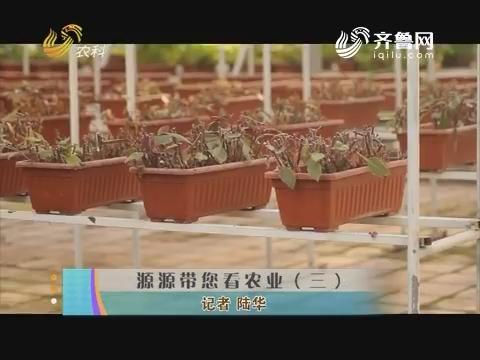 源源带您看农业(三)