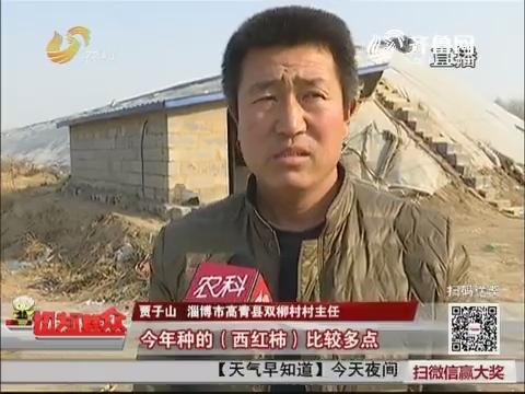 【群众新闻】淄博:滞销?双柳村20万斤西红柿待售