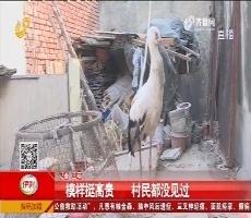 济南:出门遛弯 大叔捡到受伤大鸟