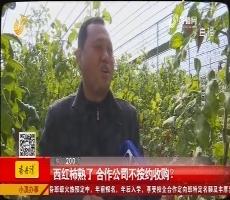 平原:西红柿熟了 合作公司不按约收购?