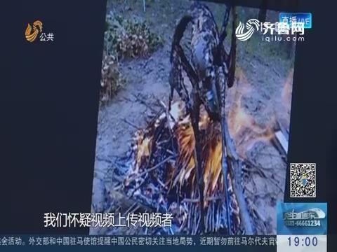 """日照:网络主播为""""吸粉"""" 直播烤制捕猎野生动物"""