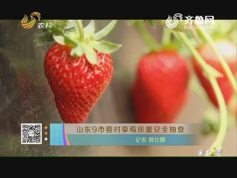 山东9市要对草莓质量安全抽查