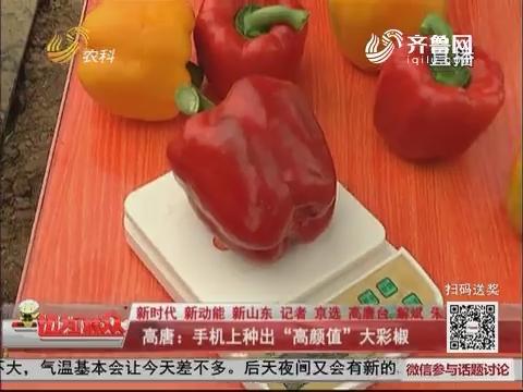 """【新时代 新动能 新山东】高唐:手机上种出""""高颜值""""大彩椒"""