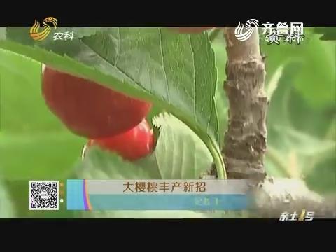 大樱桃丰产新招