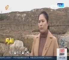 【真相】临沂:美丽山村种茶树 采出富裕生活