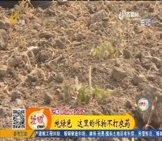 【小家大事】平原:纯绿色 这里的作物不打农药