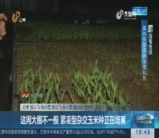 【闪电连线】莱州:这间大棚不一般 紧凑型杂交玉米种正在培育
