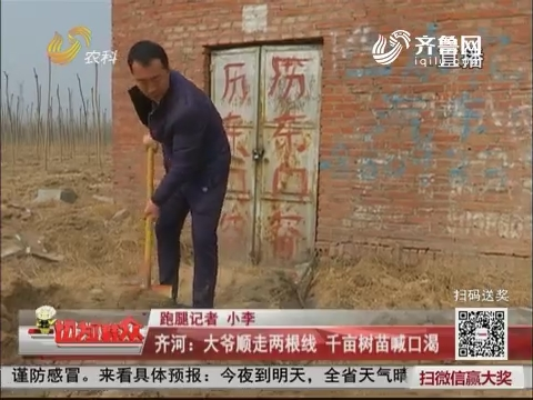【群众新闻】齐河:大爷顺走两根线 千亩树苗喊口渴