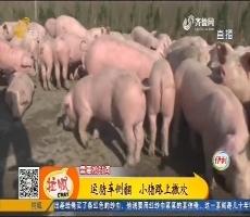 菏泽:运猪车侧翻 小猪路上撒欢