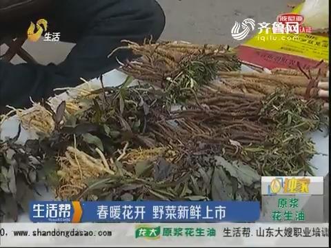 烟台:春暖花开 野菜新鲜上市