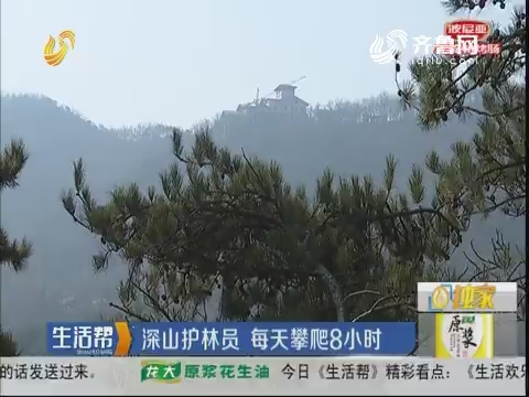 潍坊:深山护林员 每天攀爬8小时