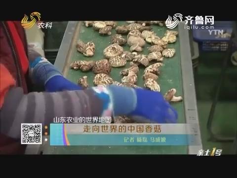 山东农业的世界地图:走向世界的中国香菇