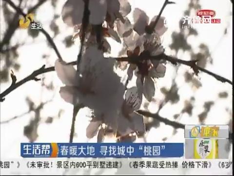 """济南:春暖大地 寻找城中""""桃园"""""""
