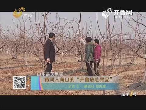 """山东最美果园:黄河入海口的""""齐鲁放心果品"""""""