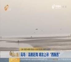 """【闪电新闻排行榜】青岛:清晨赶海 滩涂上寻""""西施舌"""""""