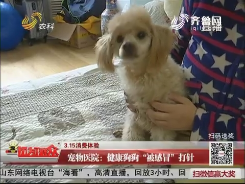 """【3.15消费体验】宠物医院:健康狗狗""""被感冒""""打针"""