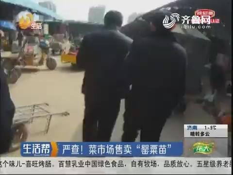 """济宁:严查!菜市场售卖""""罂粟苗"""""""