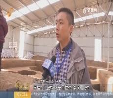 【闪电新闻排行榜】 探访章丘牛推官南遗址考古现场
