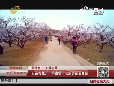 万亩杏花开!济南第十七届杏花节开幕