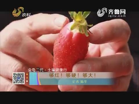 【金龟二代·土壤健康行】够红!够硬!够大!