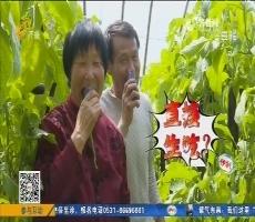 【齐鲁最美乡村】寿光:长见识!这里的茄子颜值高