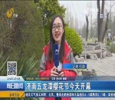 济南五龙潭樱花节3月19日开幕