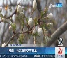 济南:五龙潭樱花节开幕