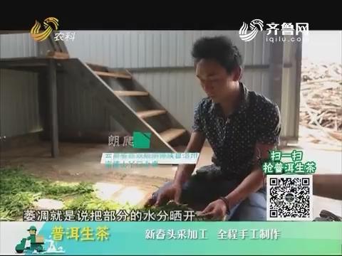 20180320《中国原产递》:普洱生茶