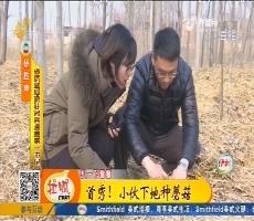 【小家大事】冠县:首秀!小伙下地种蘑菇