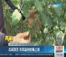 【真相】潍坊:瓜果飘香 农民富裕的庵上湖