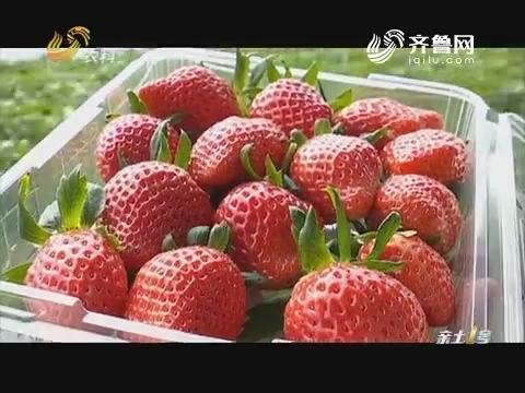 """三千万的""""草莓"""""""