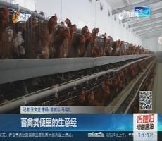 潍坊:畜禽粪便里的生意经